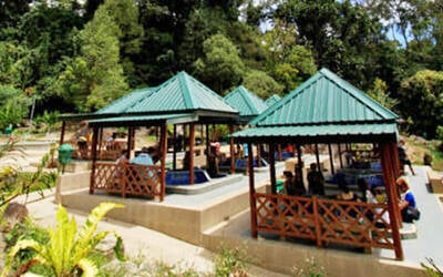 1-Day Tour of Kinabalu Park and Poring Hot Spring for 1 Child